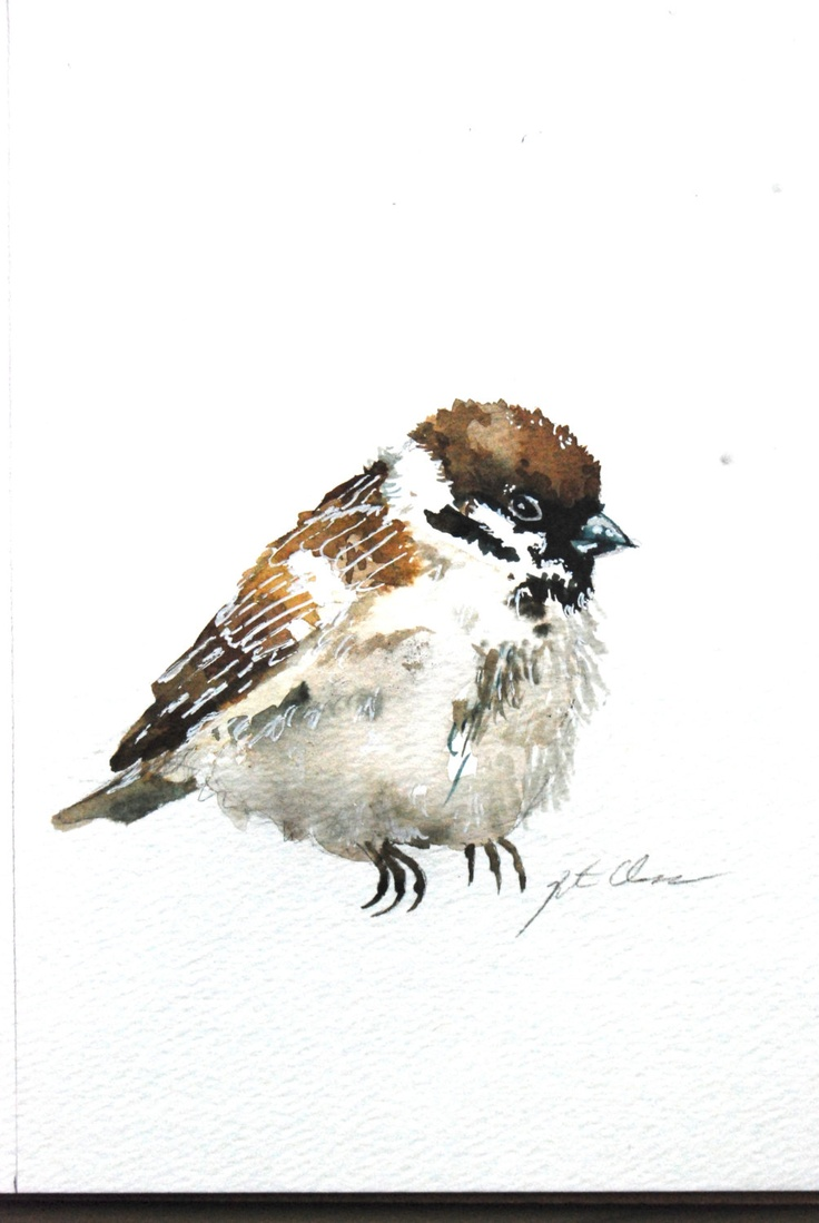 Cute Sparrows Drawing