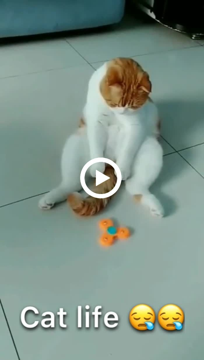 Cute Kitten Plays Alone With Its Tail Kittens Cutest Cute Animal Videos Kittens Playing