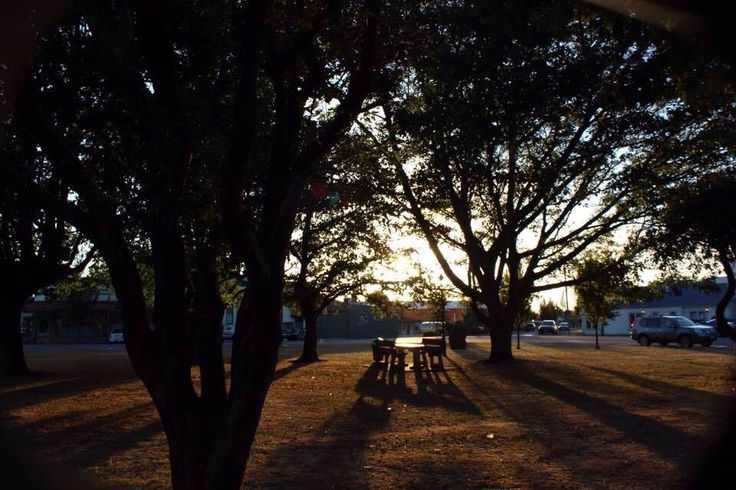 Relax under the trees in the square by Kathryn