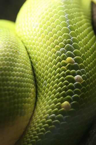 ... green snake macro ... photo by evbjone