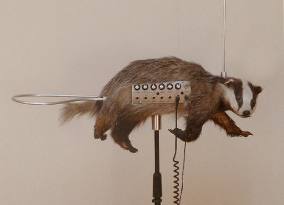 Badger + Theramin = Badgermin.  A theramin is this bizarre instrument that makes funky spacey noises in response to your disturbance of its magnetic field with your hands.  A Badgermin is just plain disturbing.
