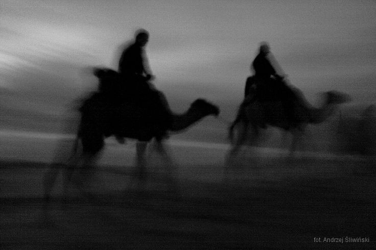 Caravan on the desert. Sahara, Morocco.