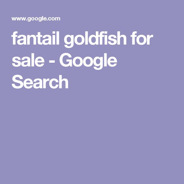 fantail goldfish for sale - Google Search