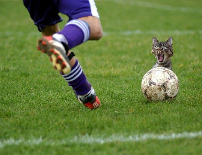 Image result for cat playing soccer