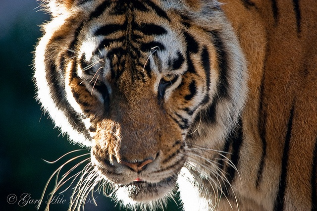 Didn't Know I Looked That Delicious by Tiger'sEye, via Flickr