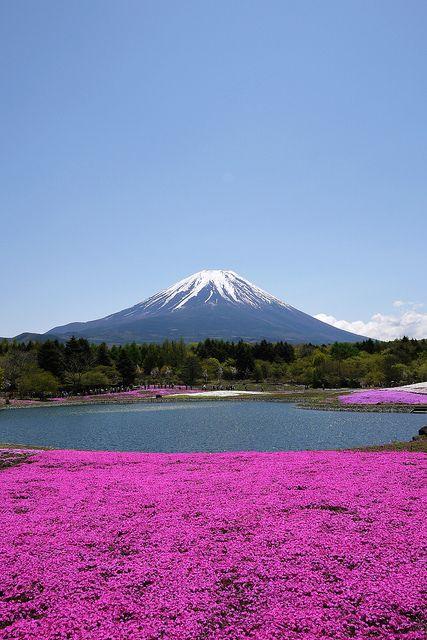 富士芝桜まつり Fuji Shibazakura
