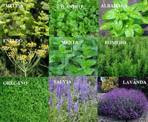 Mejores 53 im genes de plantas aromaticas en pinterest for Cultivo de plantas aromaticas y especias