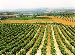 Escapadas a Bodegas en La Rioja