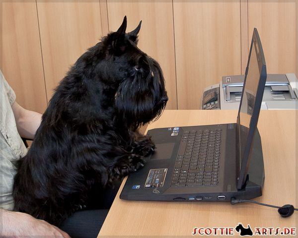 This Scottie obviously thinks his owner doesn't give him enough treats, so he is ordering more!