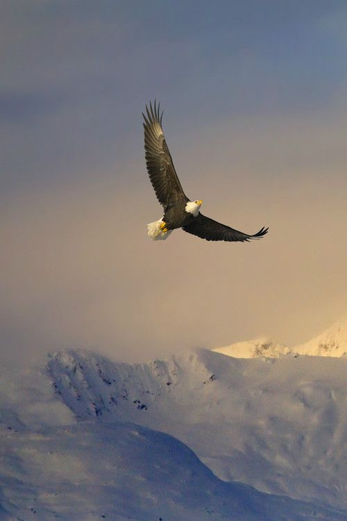 Soaring High by Mark Lissick