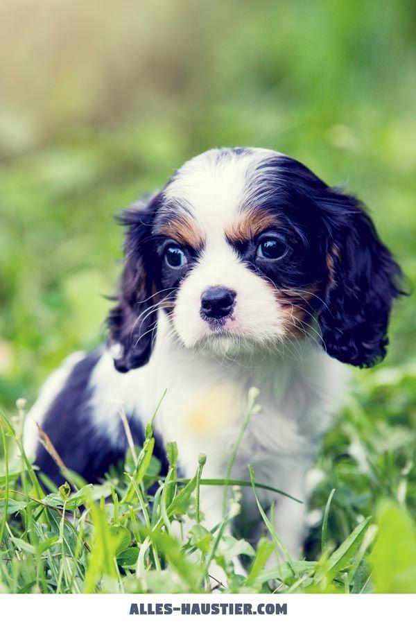 Diese 21 Total Susse Hunde Sind Einfach Zum Verlieben Niedliche