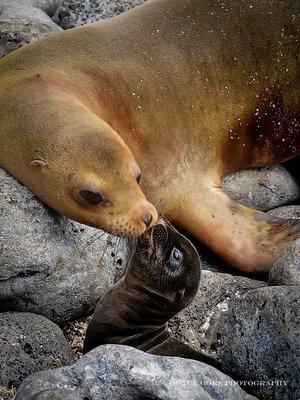 Galapagos: Adorable moment.