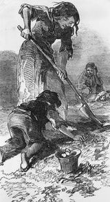 Digging for Potatoes    A starving family digging for potatoes, as depicted in the Illustrated London News in 1847  Getty Images