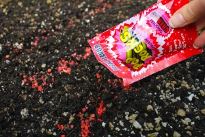 Candy Garden | Low Commitment Project