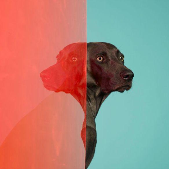 2 colors Dog