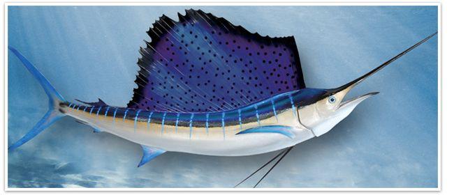 10 best shark mounts images on pinterest fish mounts for Global fish mounts