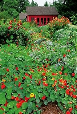 Terry Hecklers art studio opens out to 5,000 square feet of vegetables and flowers, including a flush of nasturtiums and stands of dahlias.
