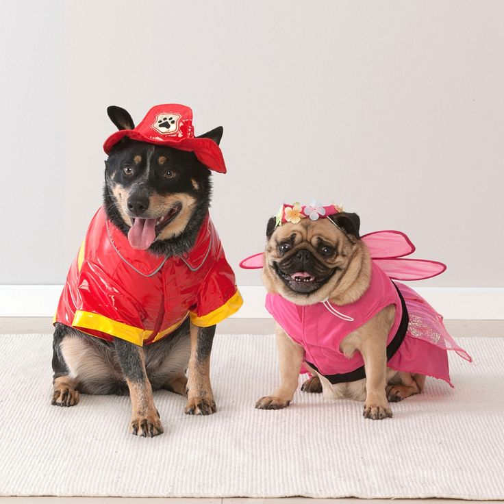Did somebody say fancy dress? Dress up your pooch for just $15 with these adorable pet costumes! #getsavvy #savvyshopper #savvypets #petcostumes #puglife #bargain #bargainshopper