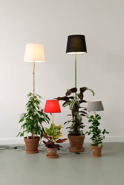 plant-lamp