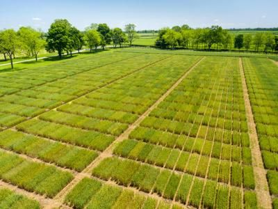 UK Winter Wheat Meeting is Jan. 5   UK College of Agriculture News