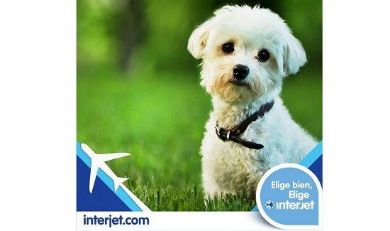 Interjet, en problemas por perder un perro - http://www.esnoticiaveracruz.com/interjet-en-problemas-por-perder-un-perro/