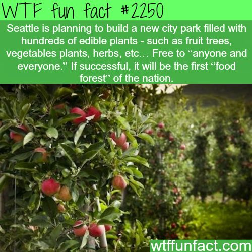 Seattle Fruit forest - WTF fun facts