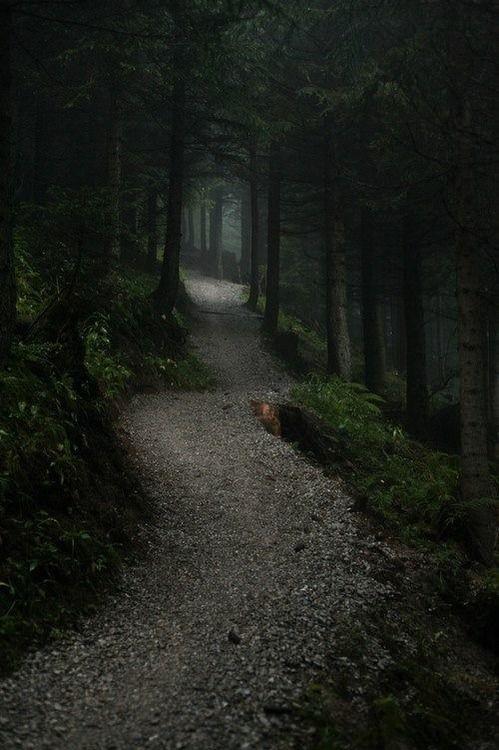 Belo caminho dentro da floresta escura.