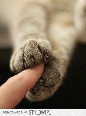 """""""If you would know what a cat is thinking about, you must hold its paw in your hand for a long time."""" --Jules Champfleury"""