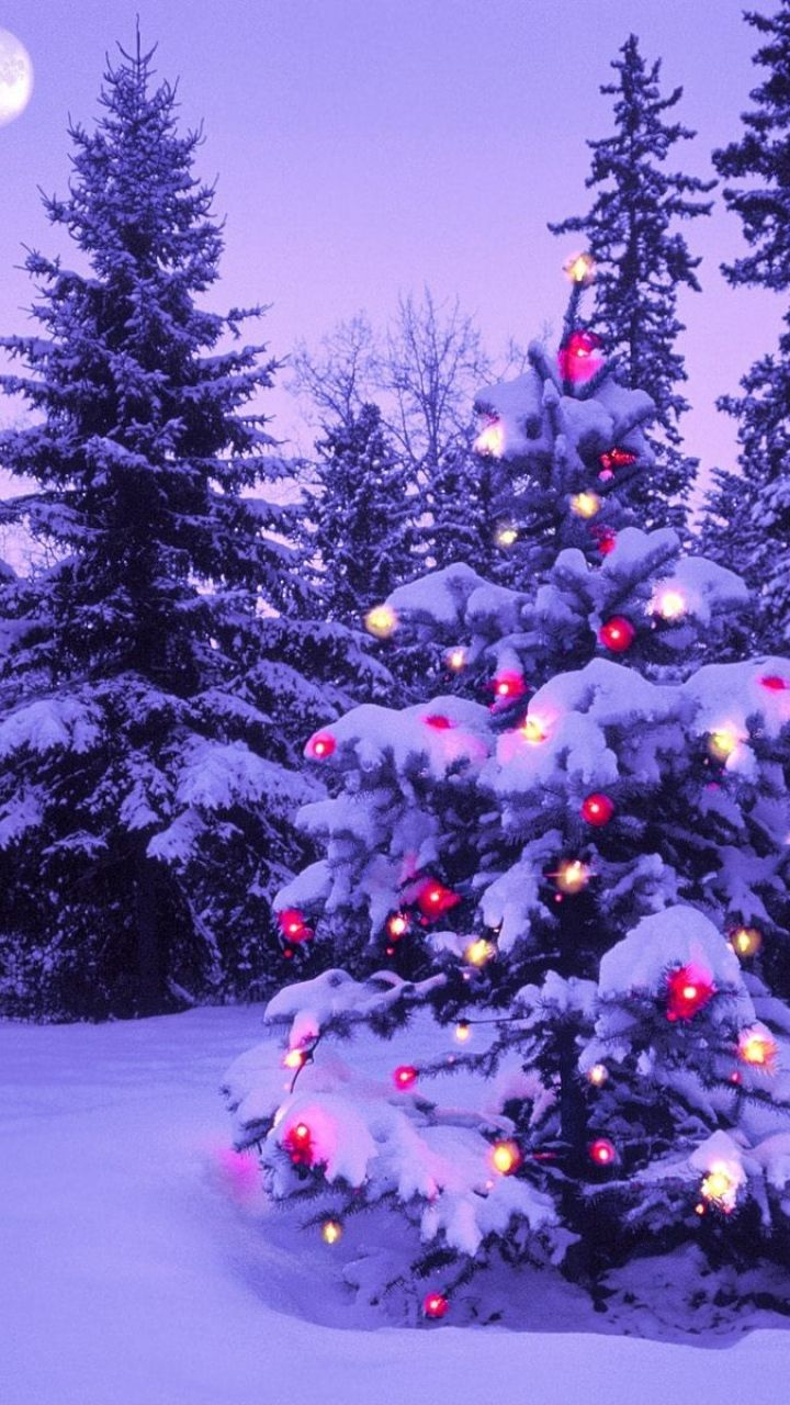 Download Wallpaper 720x1280 Wood, New year, Christmas, Fur-tree, Fires, Garland, Snow, Winter, Sky, Moon, Evening Samsung Galaxy S3 HD Background
