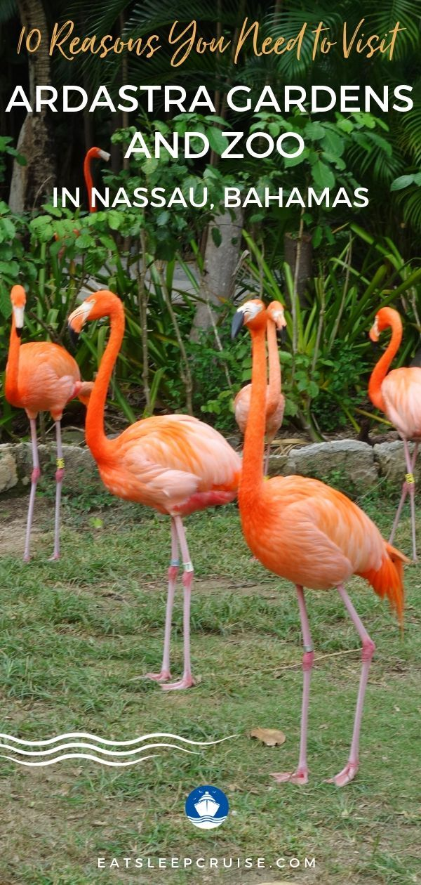d0000dd62d517b810be1ad82a9e139b0 - Nassau Bahamas Ardastra Gardens And Zoo