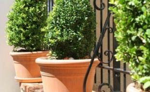 Vente en ligne de pots et accessoires en terre cuite : poterie jardin, intérieur et extérieur - POTERIE RAVEL