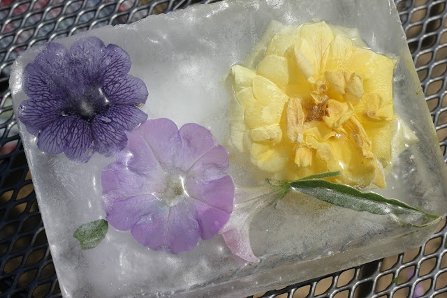 Freezing and melting flowers and toys in ice. A great, experimental science experiment for summer!