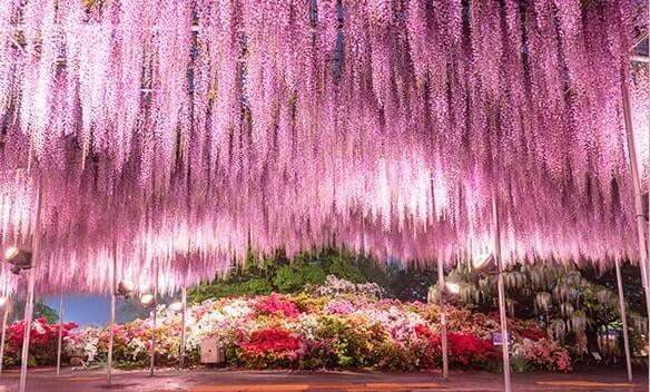 Ashikaga Flower Park Hitachi Seaside Park Tour 2020 Willer In 2020 Hitachi Seaside Park Seaside Park Flower Calendar