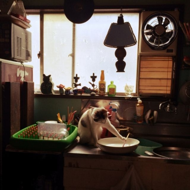 Hazukiさんの、ねこ部,ペット,猫,換気扇,アンティーク,ねこのいる風景,キッチン横の窓,昭和レトロ,一軒家賃貸,レトロ,ねこ,キッチン,のお部屋写真