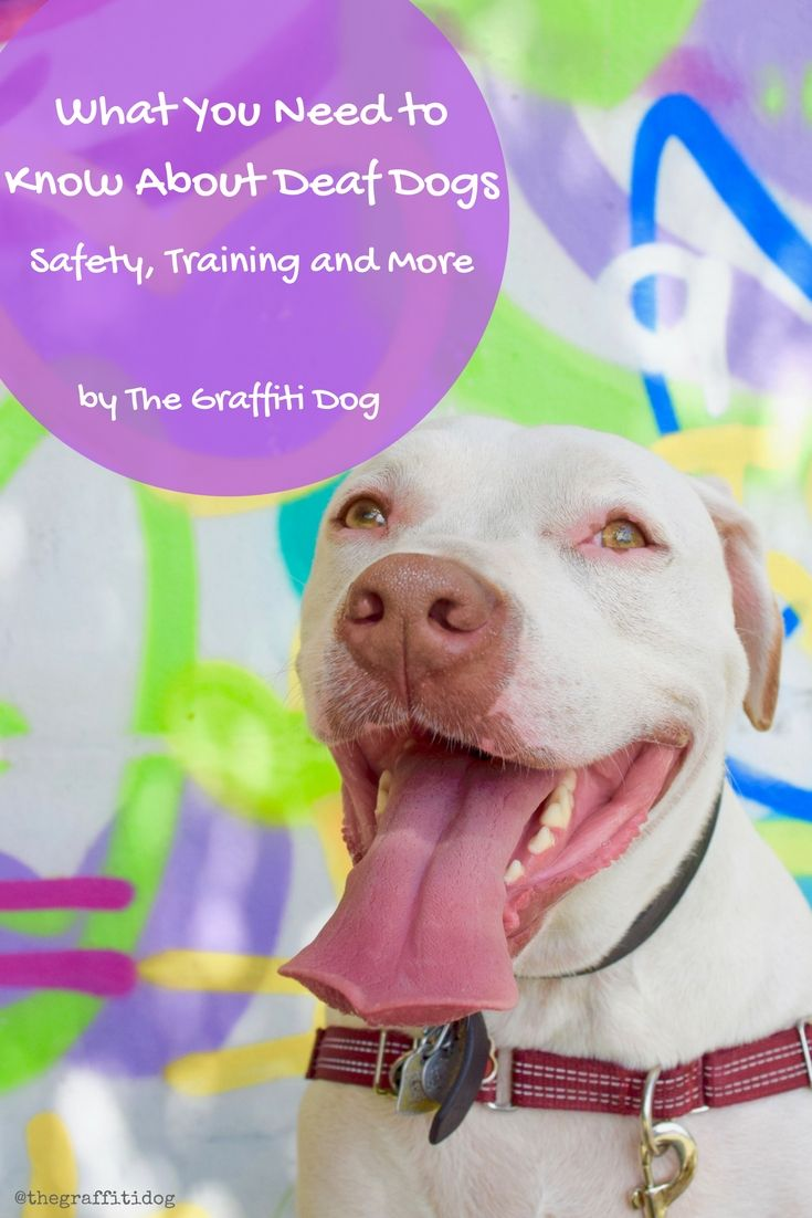 What You Need To Know About Deaf Dogs Safety Training And More
