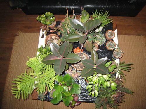 12 best House plants images on Pinterest   House plants, Plants ...