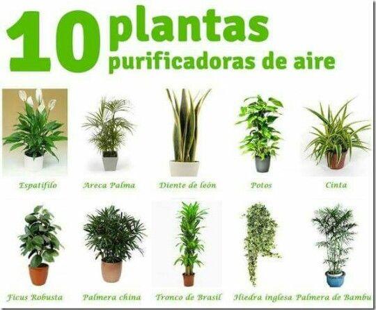 Plantas Purificantes de Aire