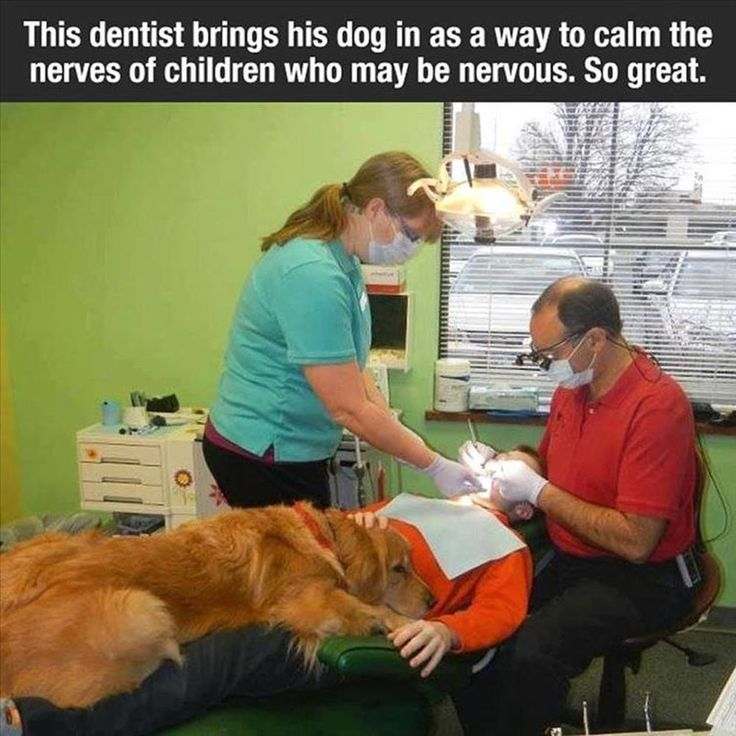 This dentist brings his dog in as a way to calm the nerves of children who may be nervous.