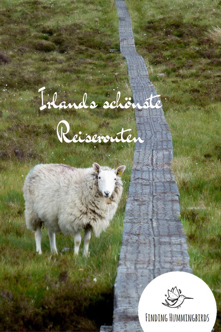 Irland: Du bist auf der Suche nach den schönsten Reiserouten in Irland? Hier findest du sie.