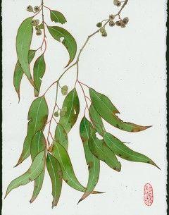 Eucalyptus 6 watercolour , pencil and gouache on Arches paper. Original painting by Gaby Malpas