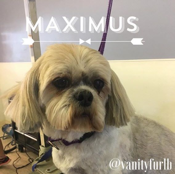 Love Your Hair Where Did You Get It Done Vanity Fur Pet Grooming