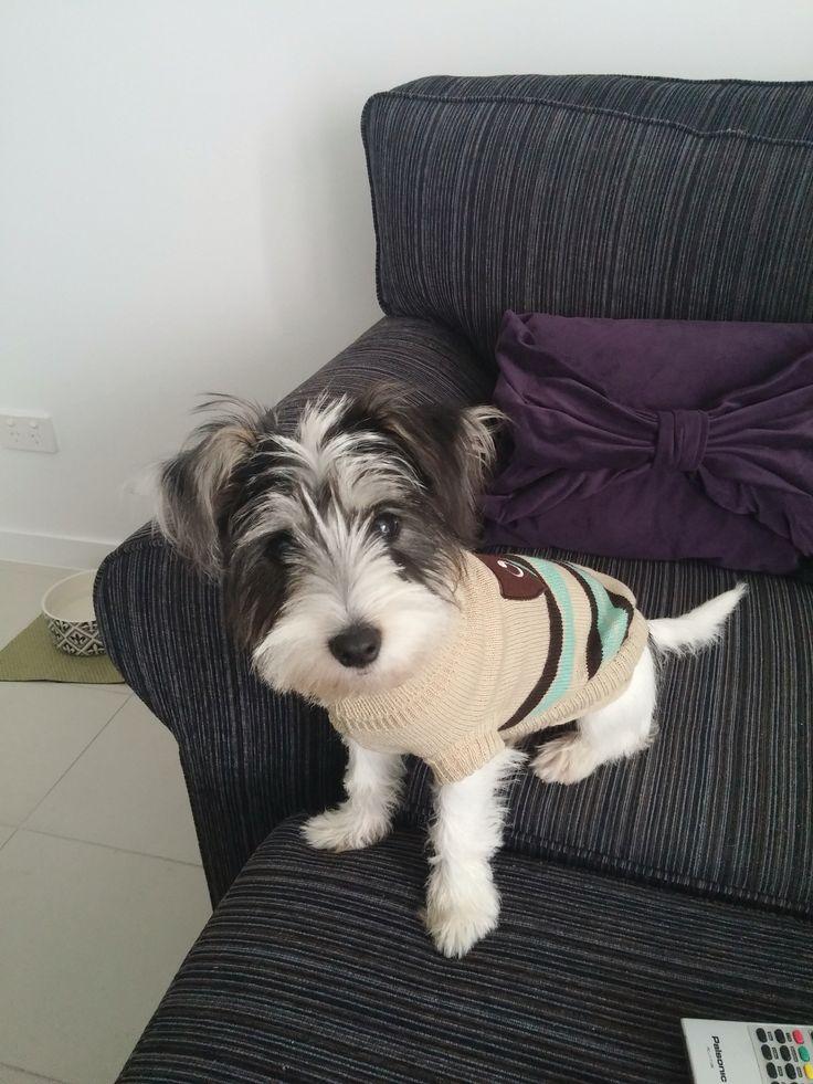 Do you like my jumper?
