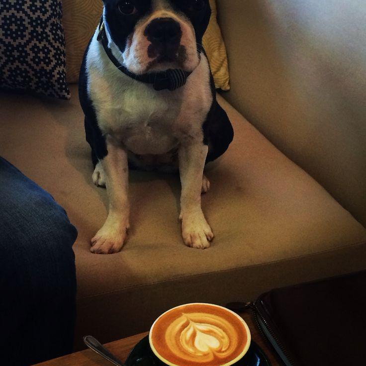 Dog and coffee! #tribecoffee www.tribecoffee.co.za
