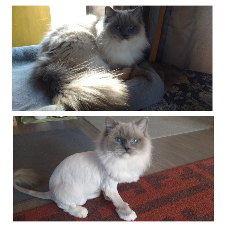 Before and after shaved pussy (SFW)