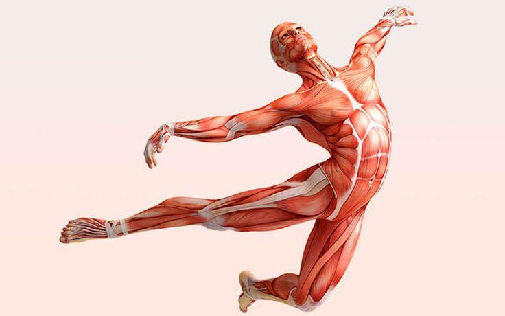 Фасциальная гимнастика (физические <a href='http://econet.ru/articles/tagged?tag=%D1%83%D0%BF%D1%80%D0%B0%D0%B6%D0%BD%D0%B5%D0%BD%D0%B8%D1%8F' target='_blank'>упражнения</a> и лечебная физкультура)