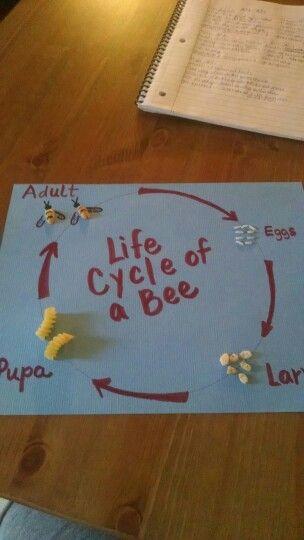 25 best ideas about bee activities on pinterest bee