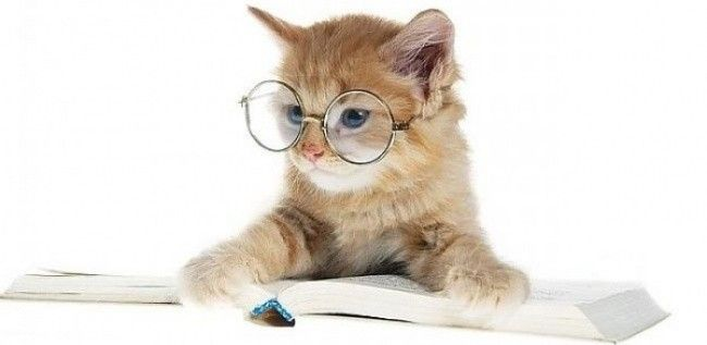 Imágenes+De+Gatos+Con+Lentes+Para+Portada+De+Facebook