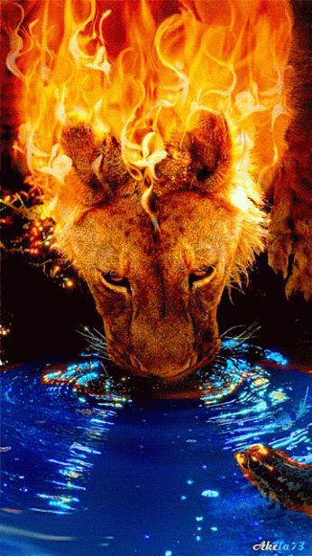 """ღ Leon de Juda -- """"El eterno Dios es tu refugio, Y acá abajo los brazos eternos; El echó de delante de tí al enemigo, Y dijo: Destruye""""....Deuteronomio 33:27 ღ♥"""