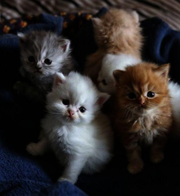 Breathtaking Cute Kittens Cuddling Gif Great Kittens Cutest Baby Cats Cute Baby Cats