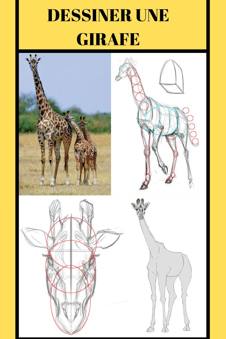 Comment Dessiner Une Girafe Comment Dessiner Une Girafe Comment Dessiner Dessin